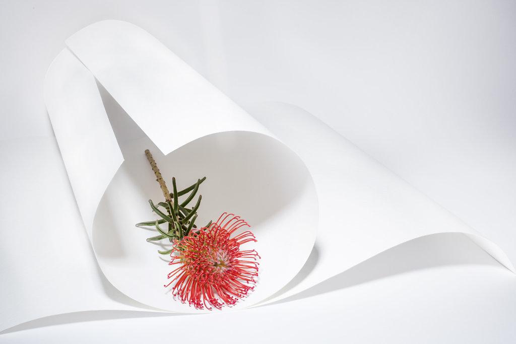 fleur-rouge-bis.jpg